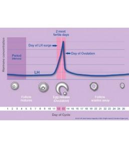 Clearblue Digital Ψηφιακό Τεστ Ωορρηξίας 10 Τεμ.